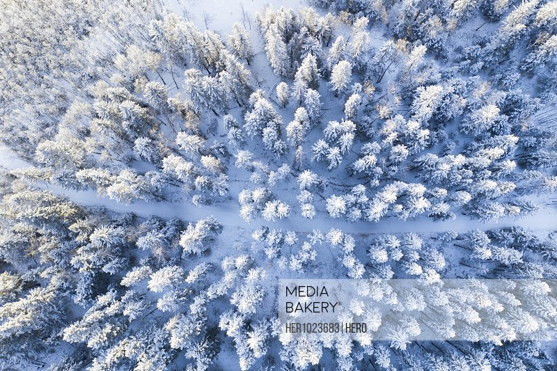 Drone point of view snow covered treetops in forest, Alberta, Canada