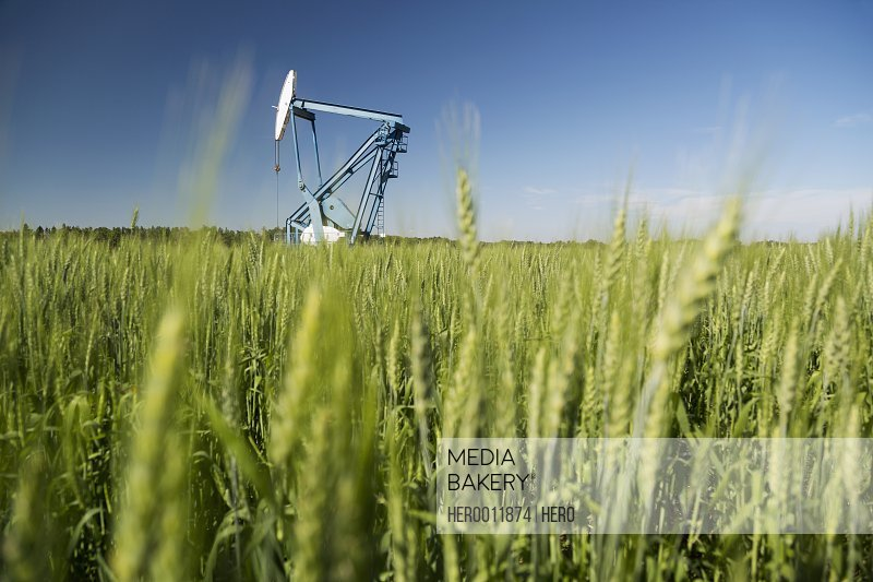 Oil well in background of green wheat field