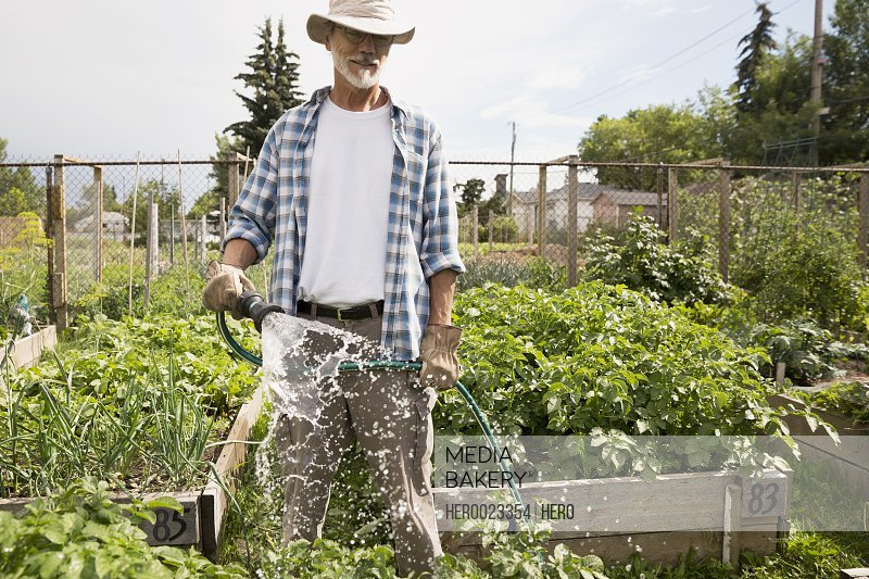 Man watering vegetable garden with hose