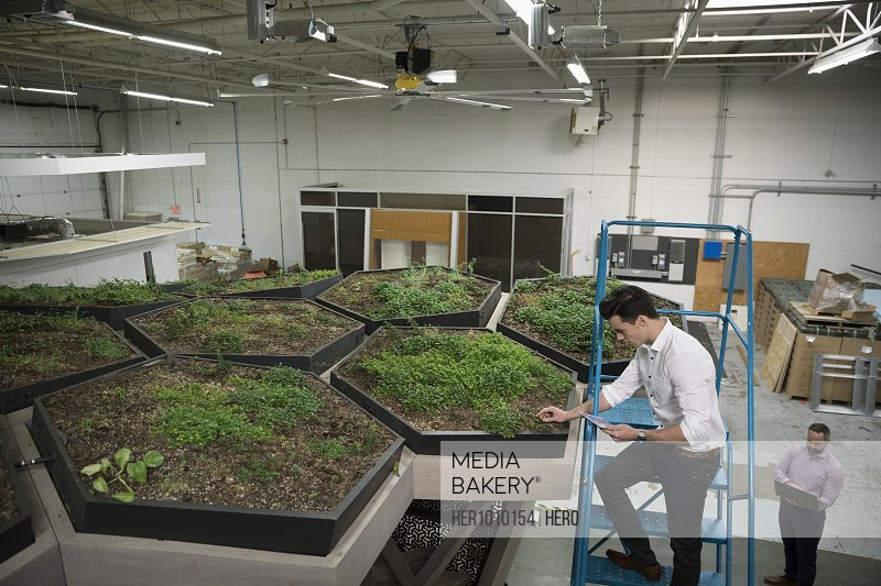Botanists examining rooftop garden experiment in laboratory