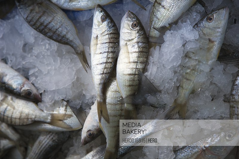 Striped fish on ice
