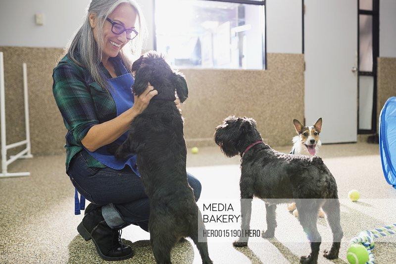 Dog daycare owner petting dog