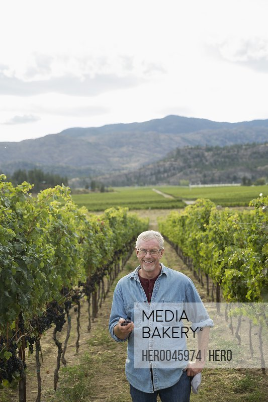 Portrait smiling senior male vintner holding grapes in vineyard