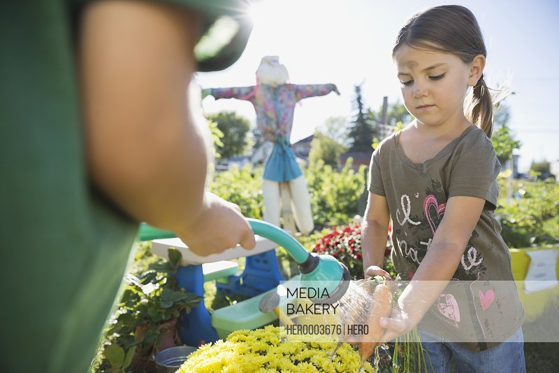Girl washing freshly harvested carrots with garden hose