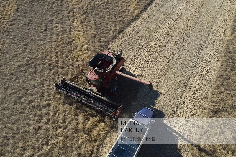 Aerial view combine harvester and trailer harvesting sunny crop
