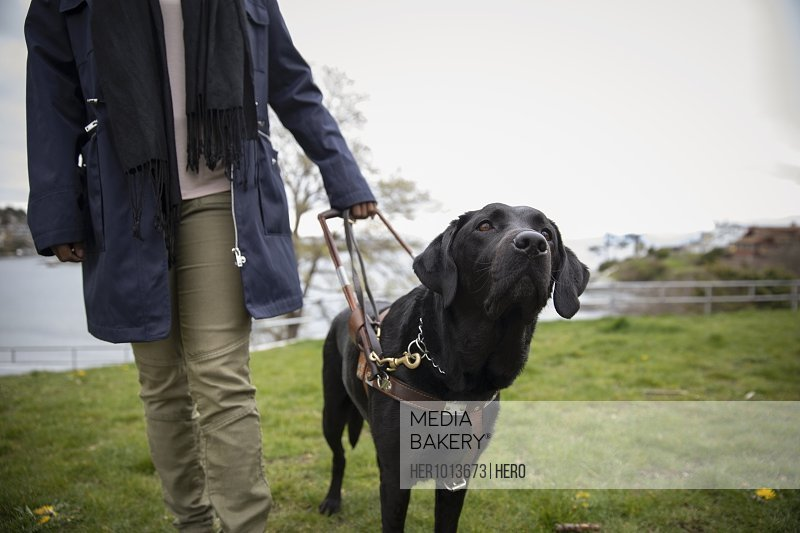 Black seeing eye dog leading visually impaired woman