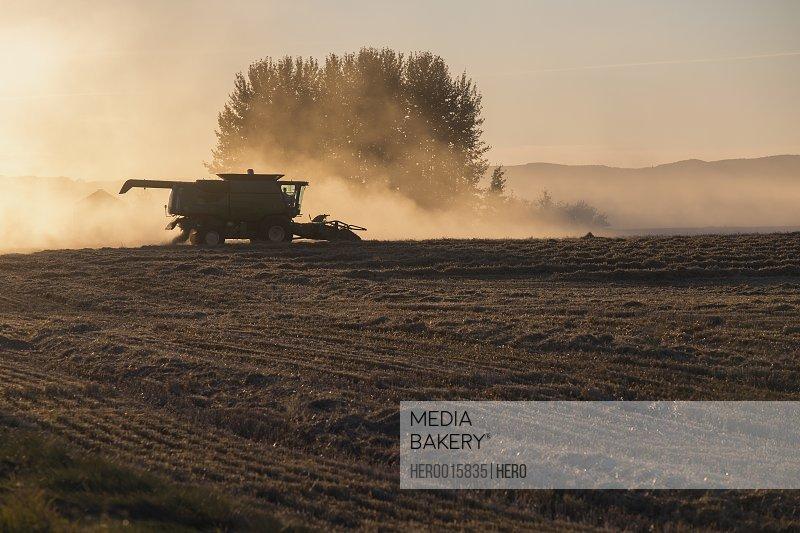 Combine harvester in dusty rural field