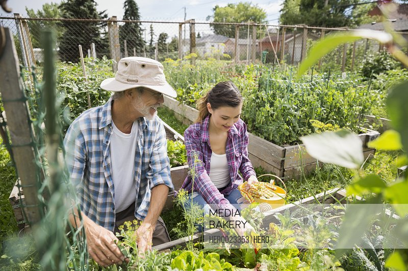 Father and daughter tending to vegetable garden