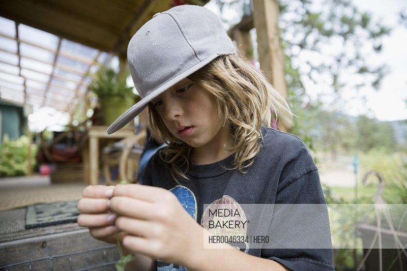 Curious boy holding plant