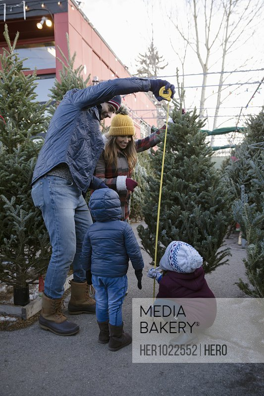 Family measuring Christmas tree at Christmas market