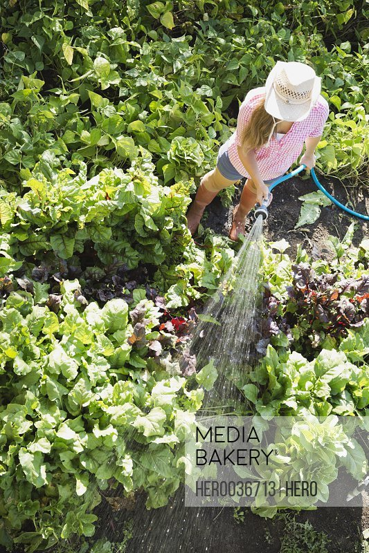 High angle view of woman watering plants in vegetable garden