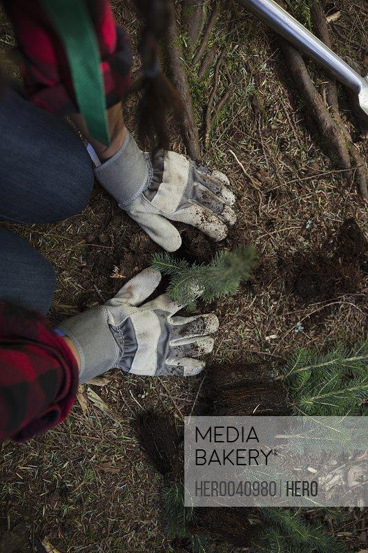 Volunteer planting tree in woods