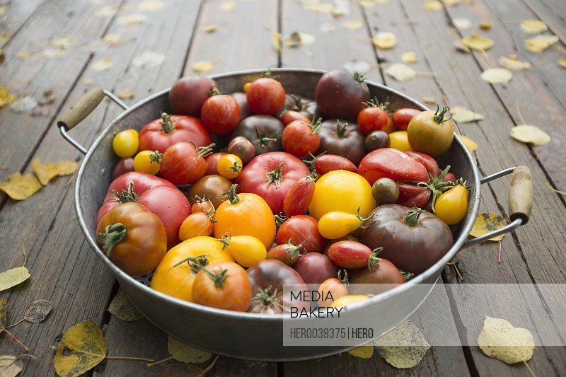 Still life variety fresh organic tomatoes in bowl