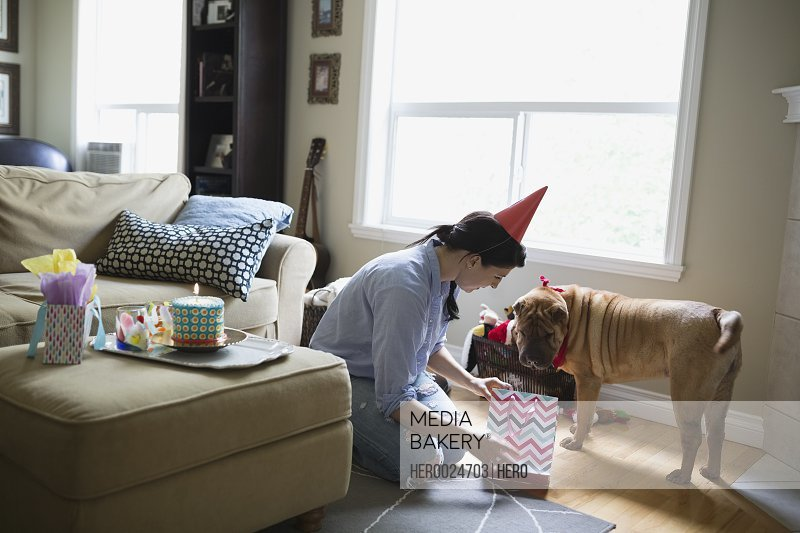 Woman giving dog birthday gift in living room