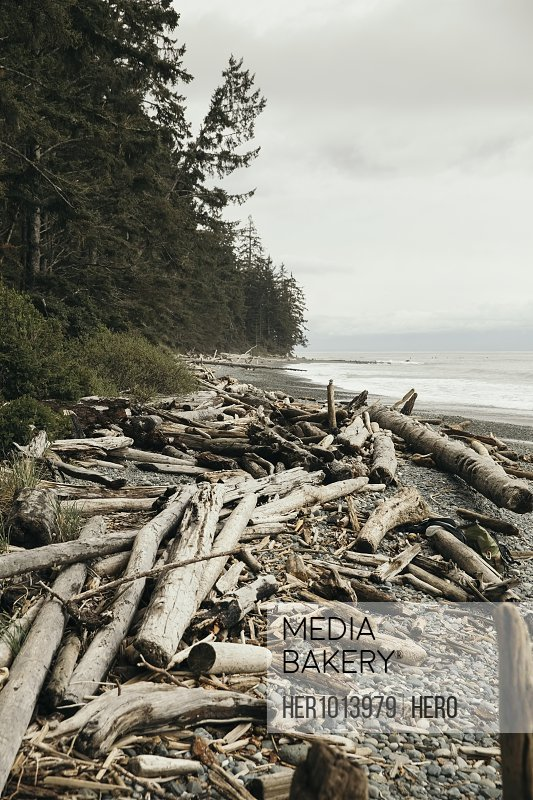 Driftwood on tranquil, rugged beach