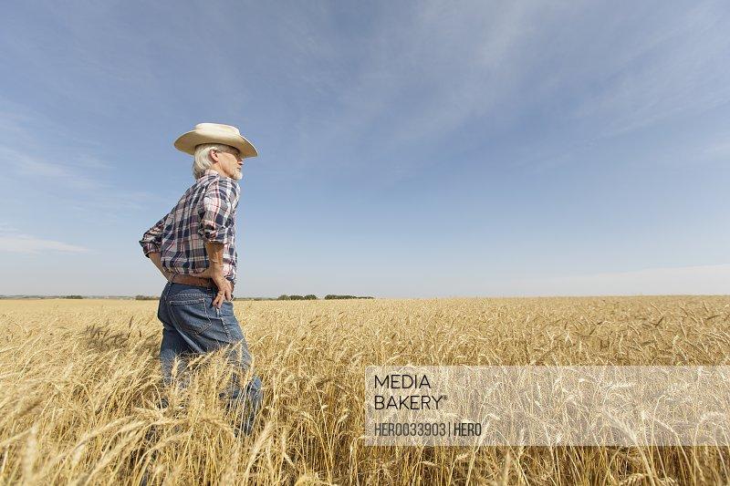 Senior man standing in wheat field.