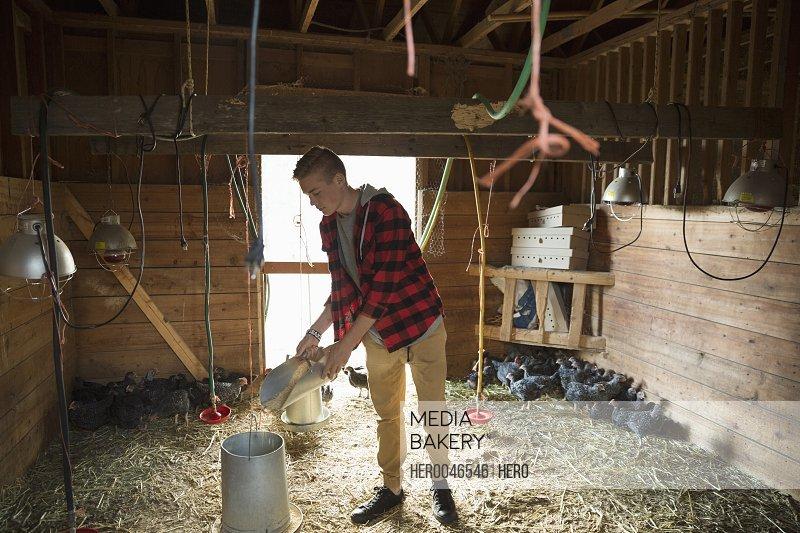 Boy filling feeder in barn