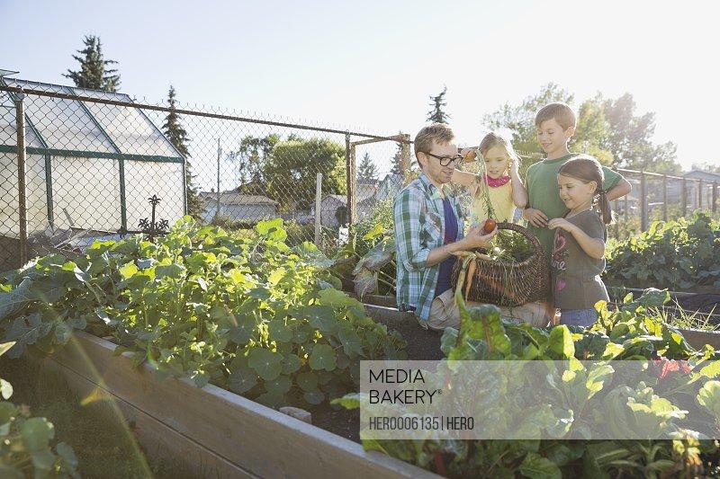 Teacher showing harvested vegetables to kids in community garden