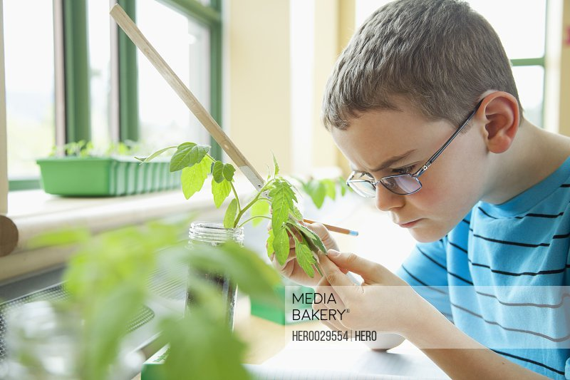 elementary student taking measurements of plant