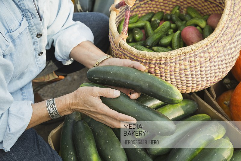 Woman holding freshly harvested cucumbers