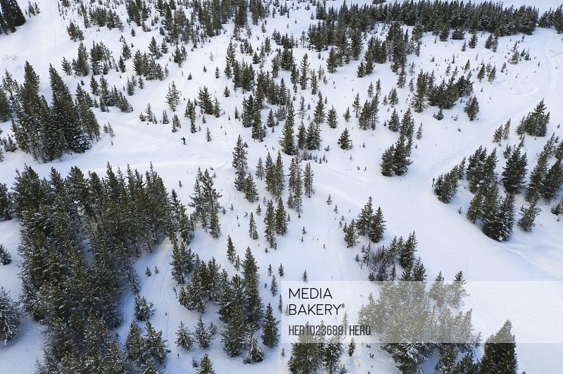 Aerial view snowy trees and mountainside, Alberta, Canada