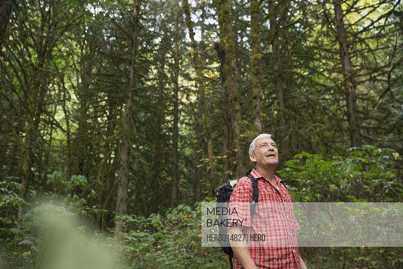 Man looking up at trees in woods