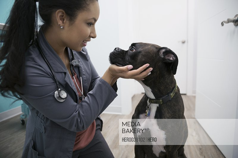 Veterinarian examining dog in clinic