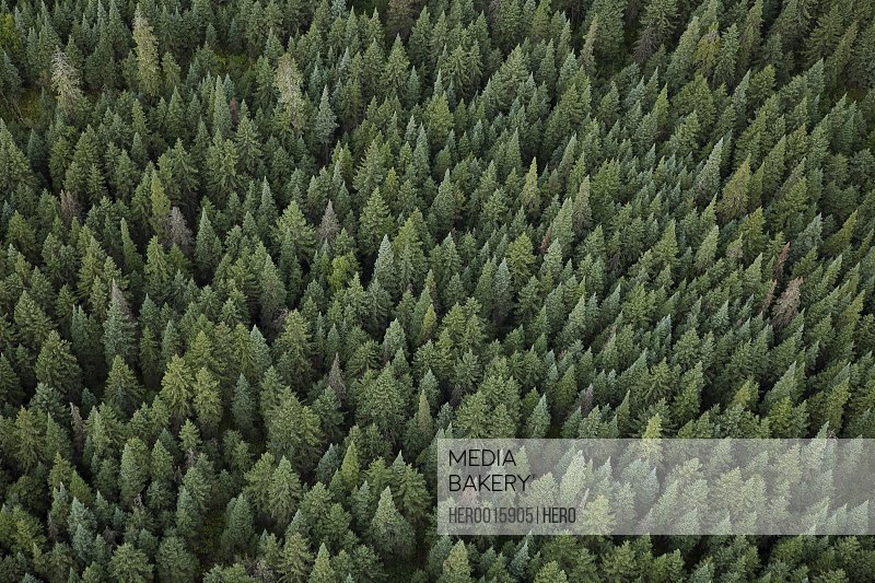 Aerial view of green treetops