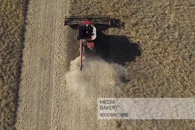 Aerial view combine harvester harvesting sunny crop