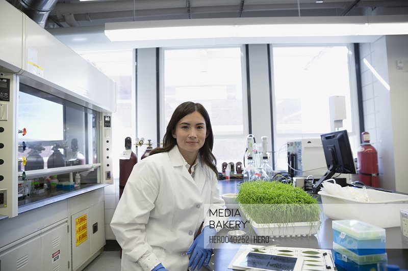 Portrait confident scientist conducting GMO experiment in laboratory