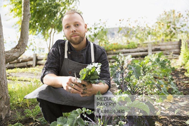Portrait farm-to-table chef harvesting kale in vegetable garden