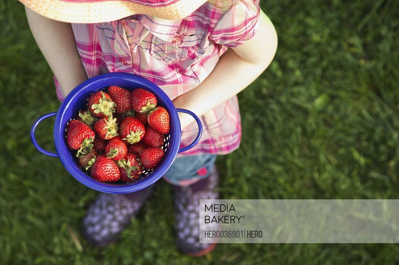 High angle view of girl holding fresh strawberries in colander