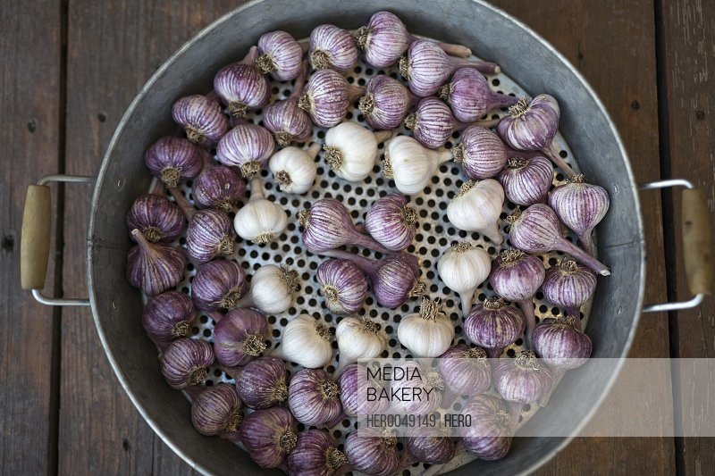 Overhead still life of fresh purple and white garlic in roasting pot