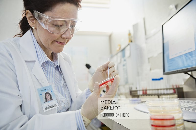 Mature female lab technician reviewing sample on petri dish at laboratory