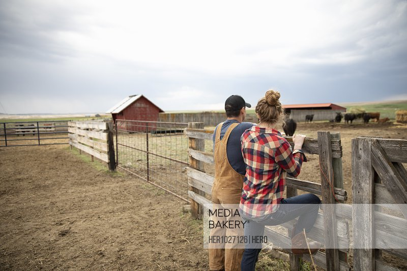 Couple watching cattle in ranch pasture