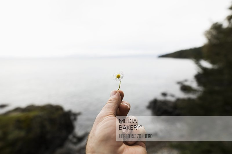 Personal perspective woman holding small wildflower with ocean in background
