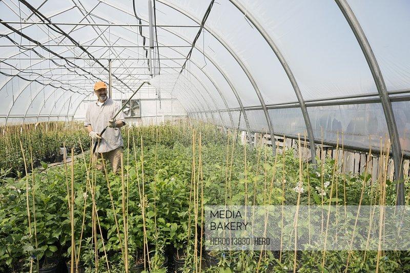 Worker watering plants in plant nursery greenhouse