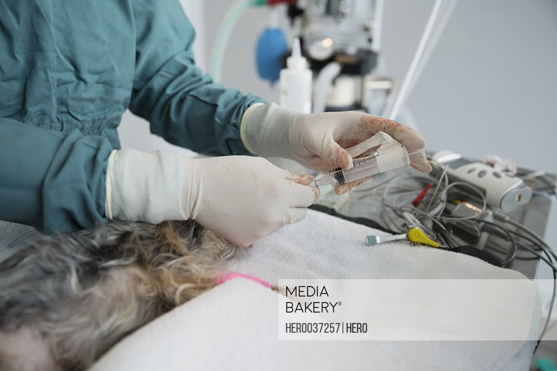 Veterinarian injecting small dog on operating table