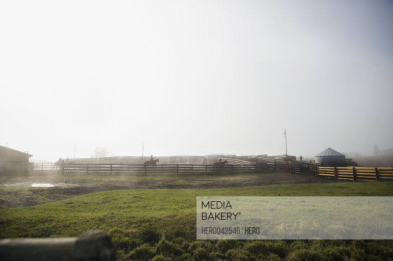Cattle ranchers on horseback behind fence on foggy ranch