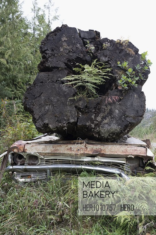 Plants growing in large fallen tree on rusted car