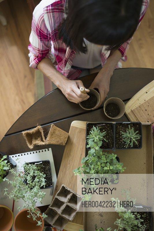 Woman potting plants at table