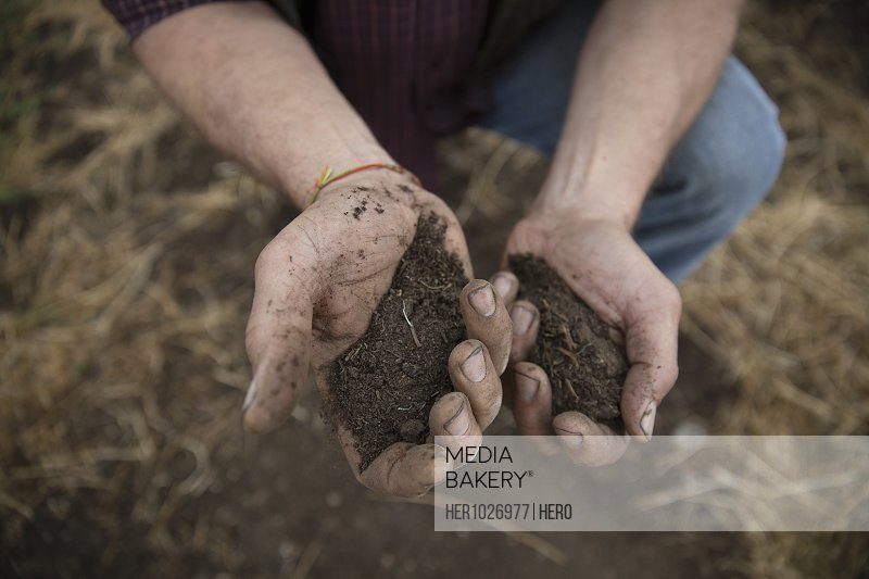 View from above male farmer examining crop soil