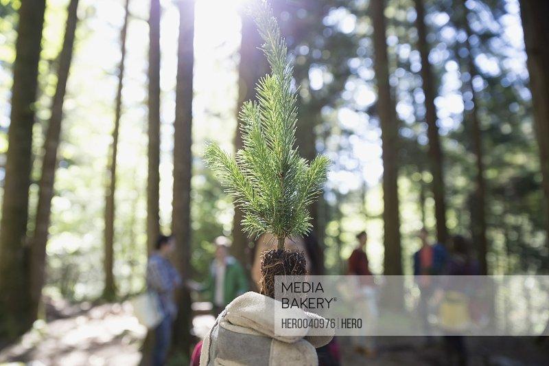 Portrait tree planting volunteer holding tree sapling in woods