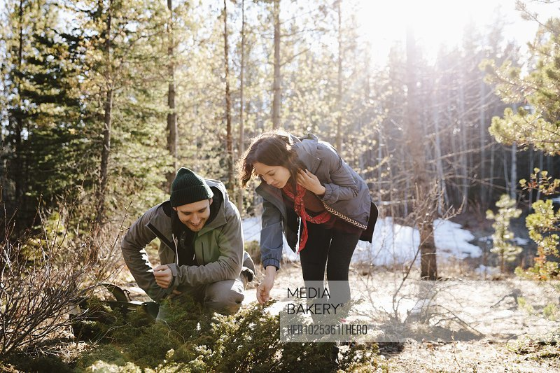 Couple looking at plants, hiking in sunny woods