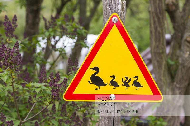 Road sign, Attention duck with pups