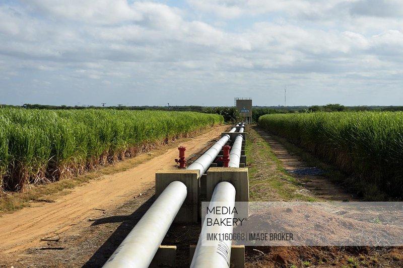 Irrigated sugar cane plantation, near Juazeiro, Bahia, Brazil, South America