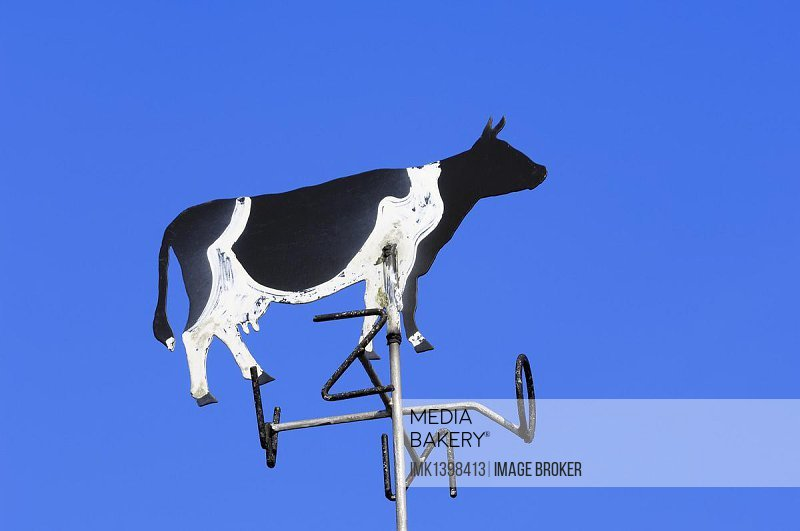 Cow-shaped weather vane, Netherlands, Europe