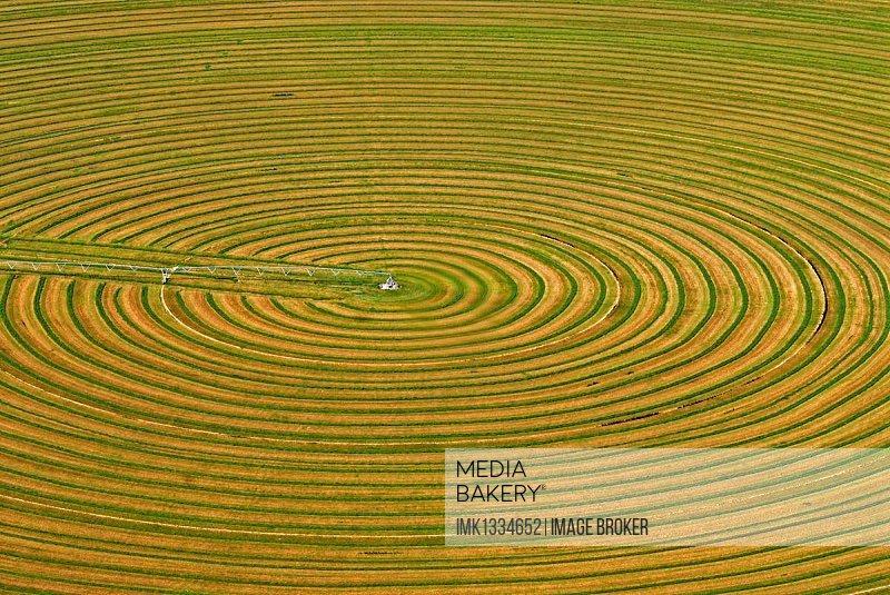 Circular field for animal feed is irrigated, monoculture, Parowan, Utah, USA, North America