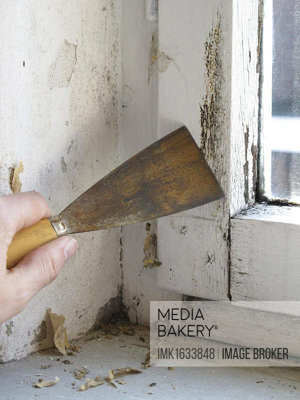 Mould on a window being removed with a spatula