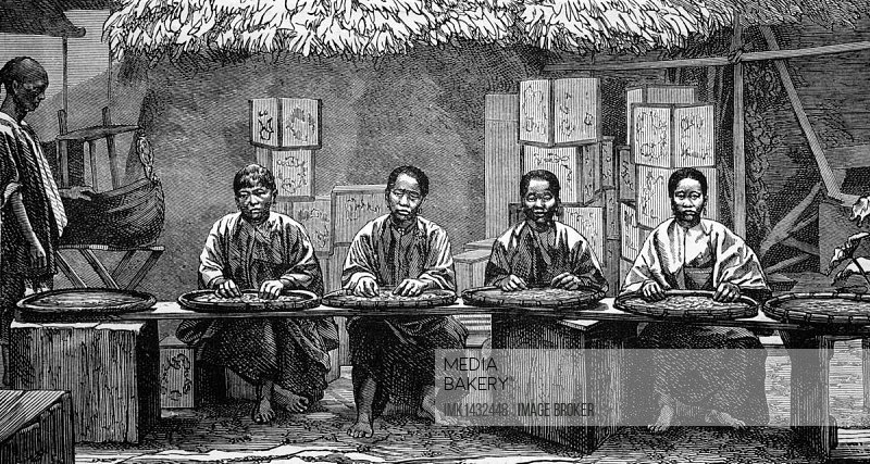 Tea sorters in China, historical illustration, wood engraving, circa 1888